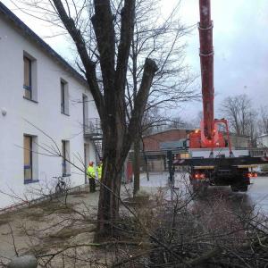 Sturm-Friederike-schlaegt-auch-an-der-HBS-zu_008