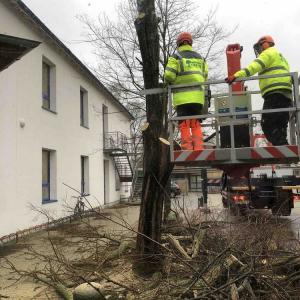 Sturm-Friederike-schlaegt-auch-an-der-HBS-zu_009