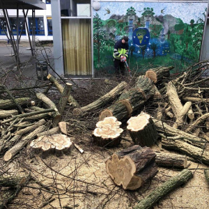 Sturm-Friederike-schlaegt-auch-an-der-HBS-zu_010